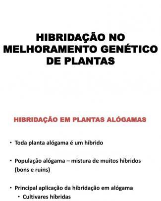 Hibridacao No Melhoramento Genetico Vegetal - Alogamas