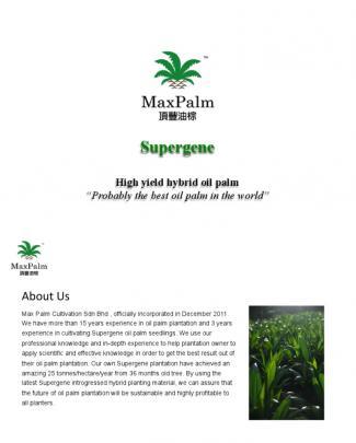 Supergene High Yield Introgressed Hybrid Oil Palm Malaysia
