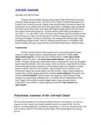 Anatomi Kelenjar Adrenal